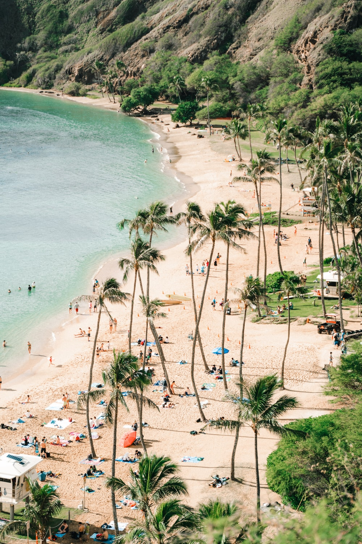 seashore and green palm trees scenery