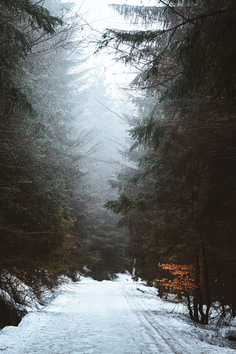 field covered with snow surrounded with green trees in foggy day