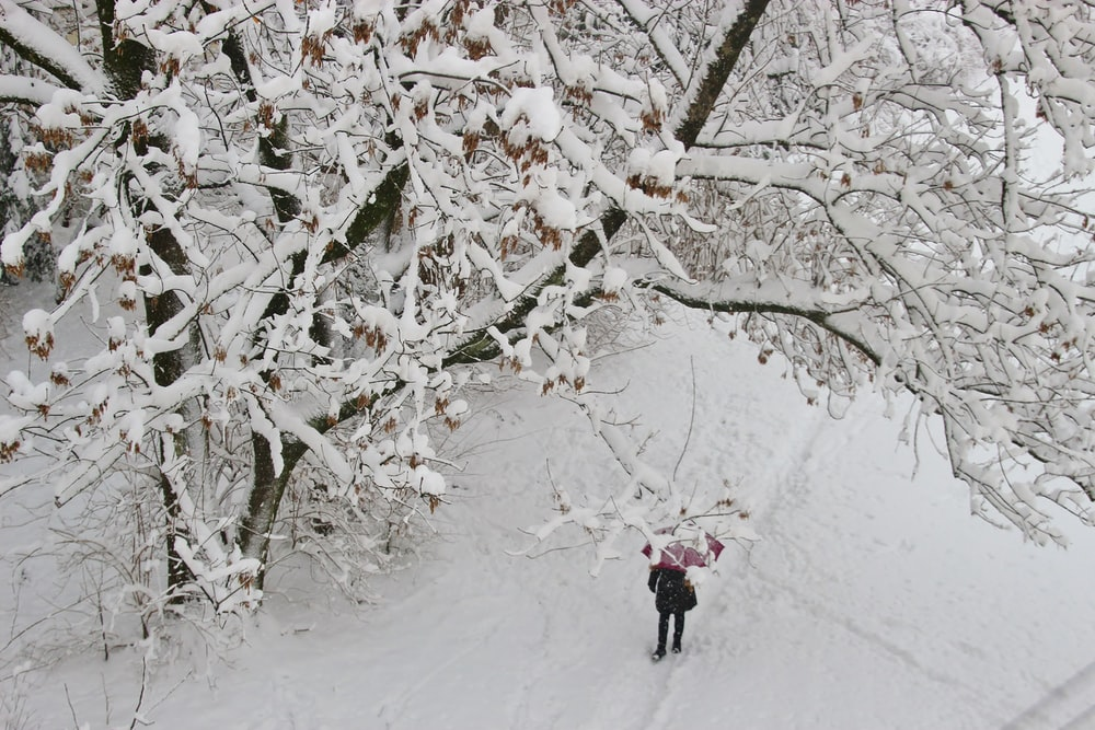 aerial photography of person under tree covered by white snow
