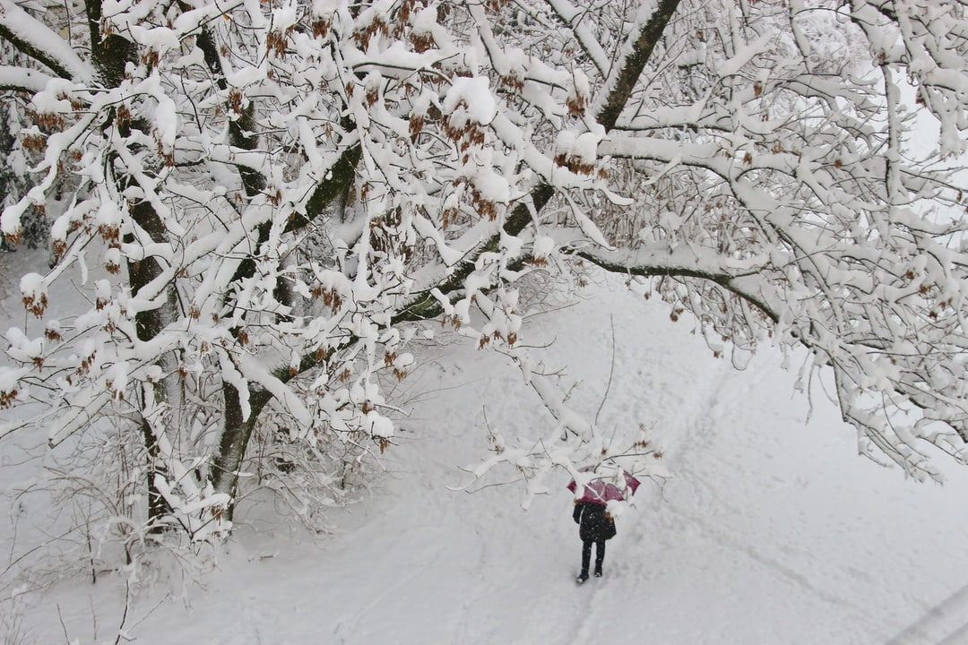 Winter in the suburb. Snow-covered trees. Aerial view down from a balcony: A woman walks along a path with an umbrella. Salzburg city, district of Lehen, Austria, Europe.