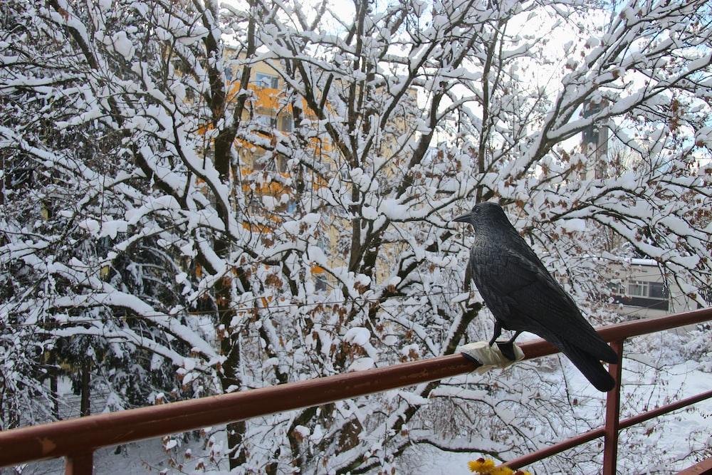 black bird on metal fence near tree with snow