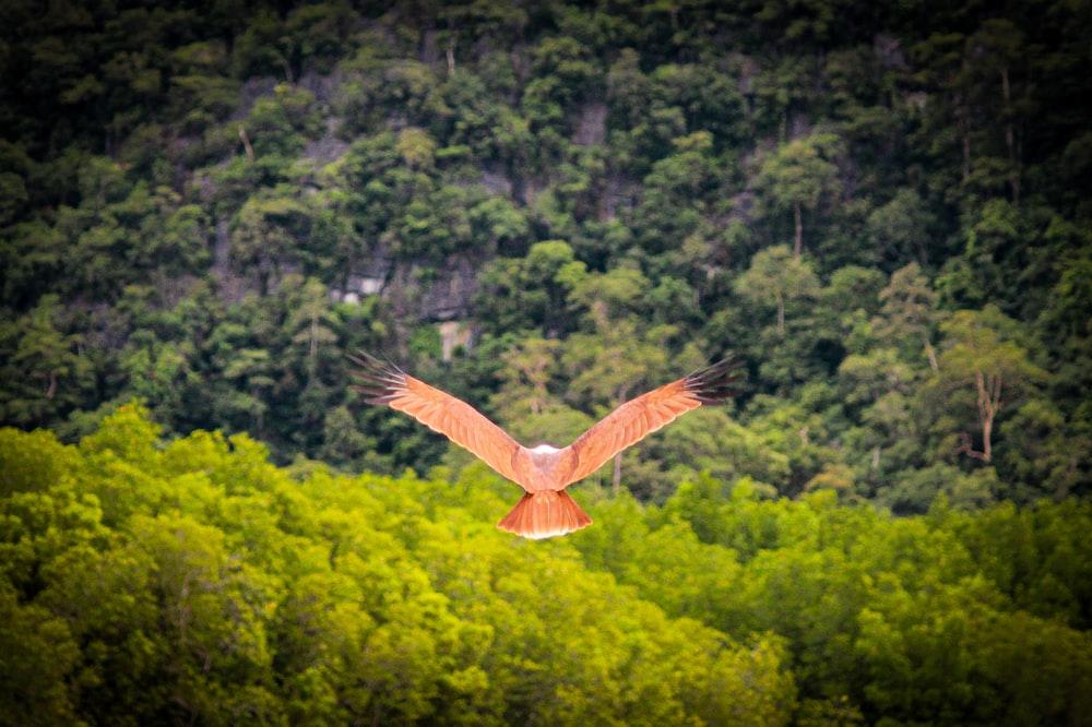 brown bird on air