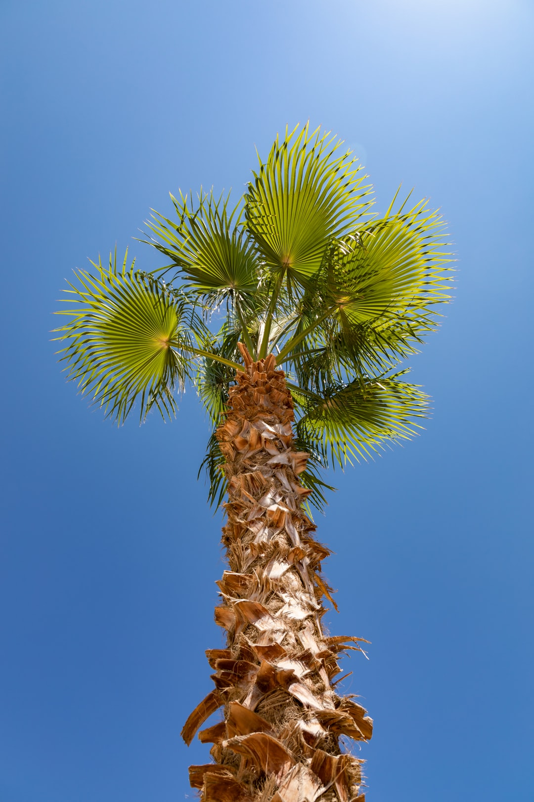 Low angle palm tree.