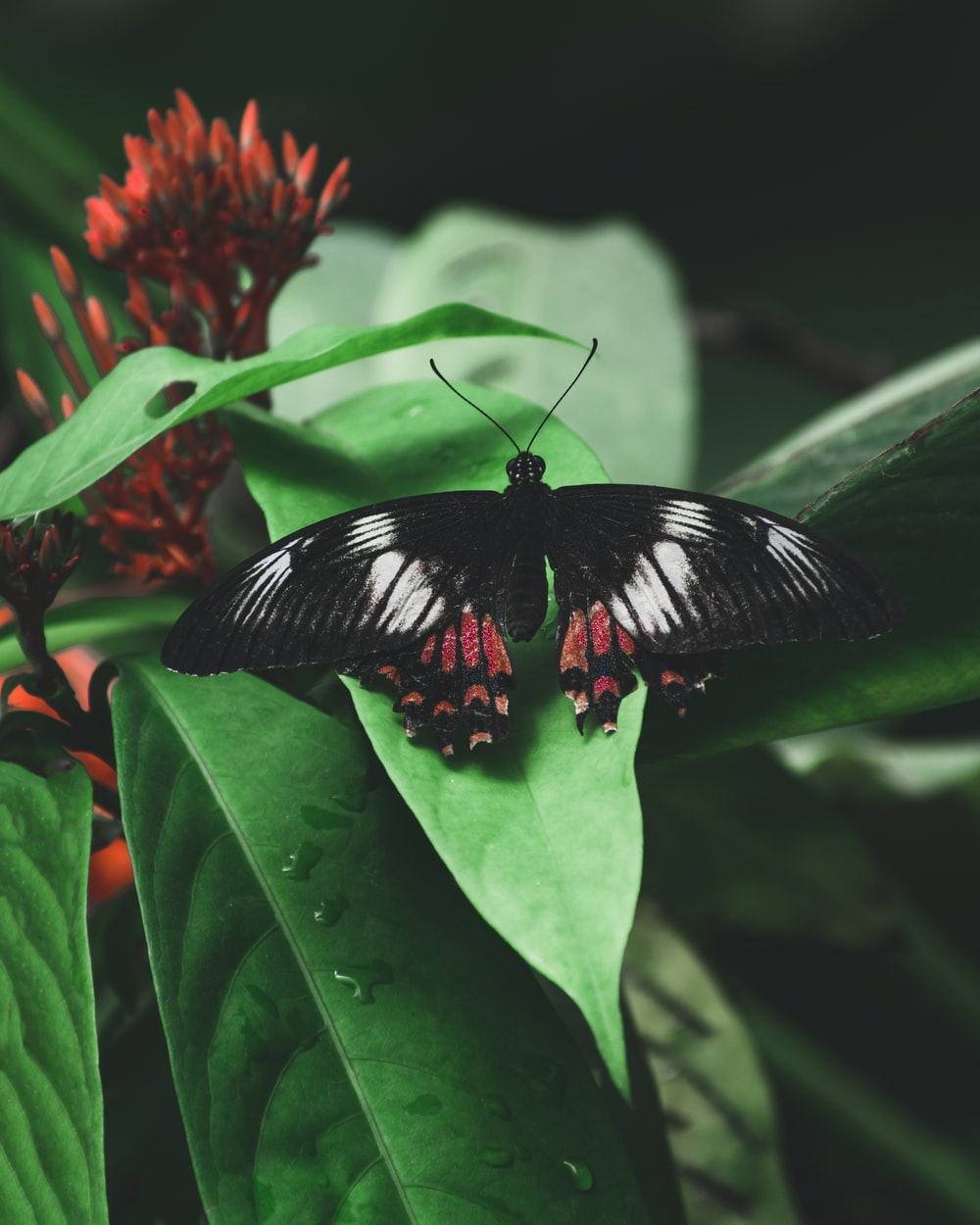 shallow focus photo of black and red butterfly