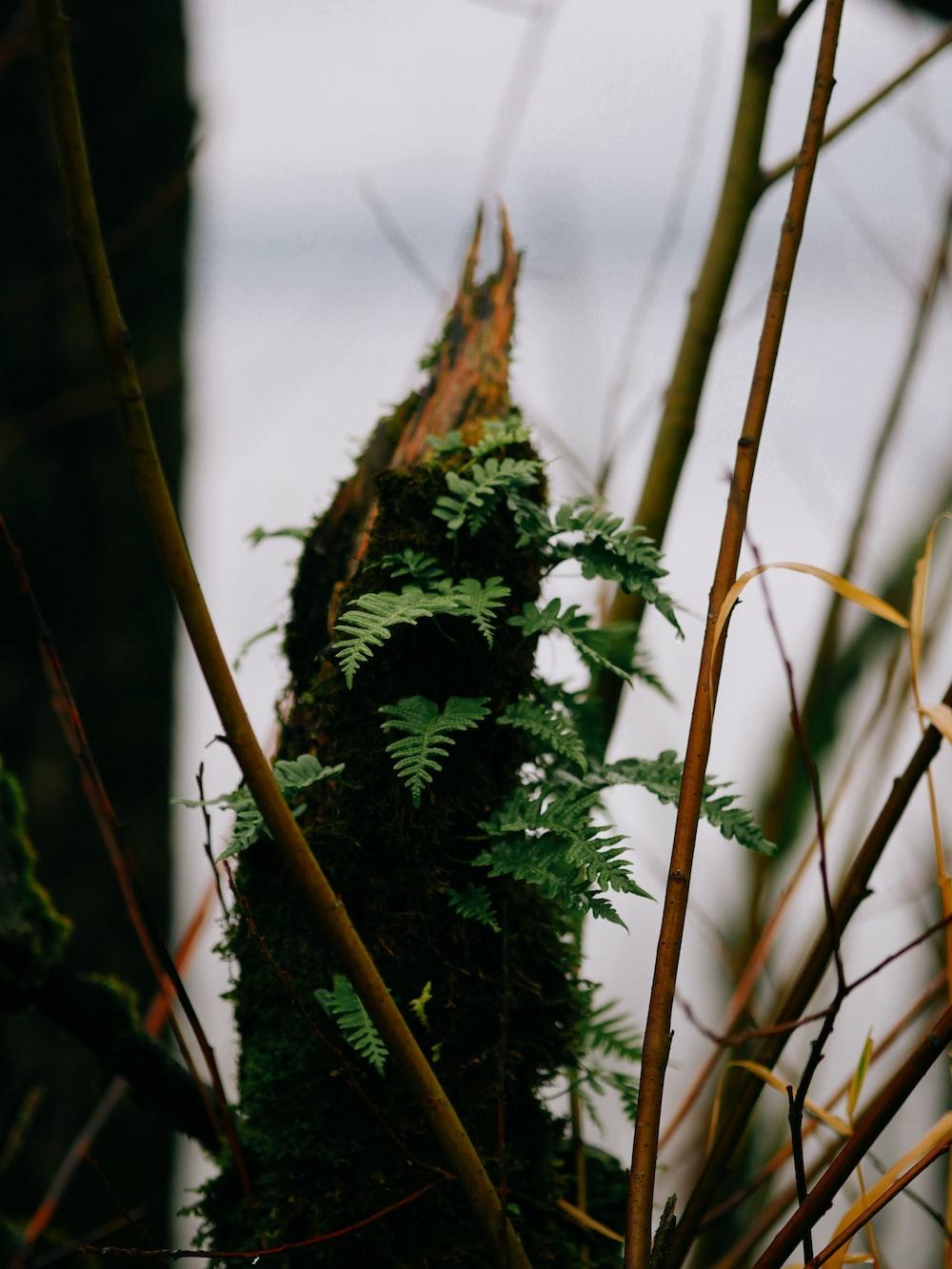 green ferns during daytime
