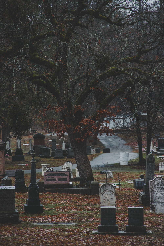 graveyard near tree