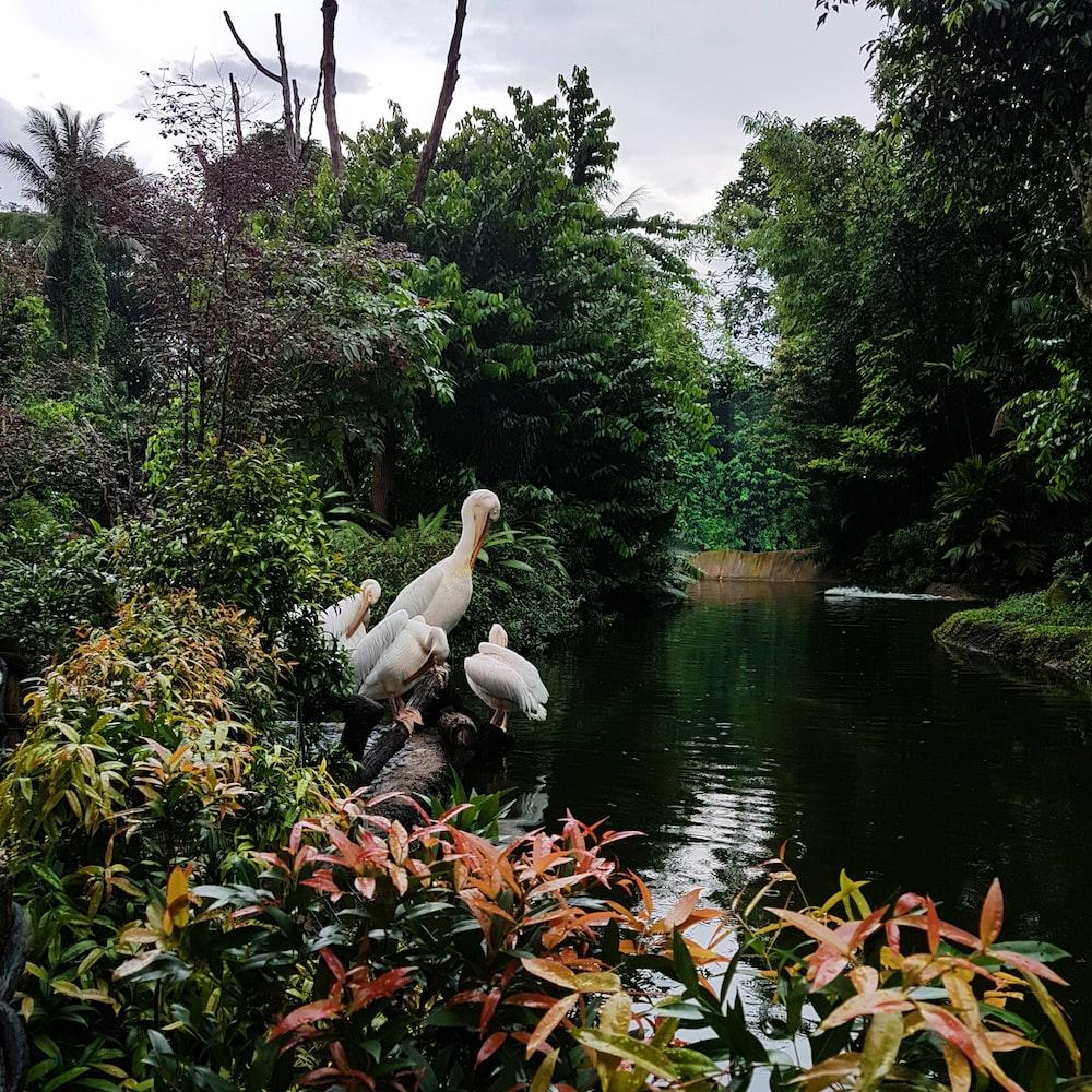 pond near plants