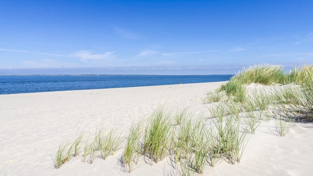 grasses on sand near ocean