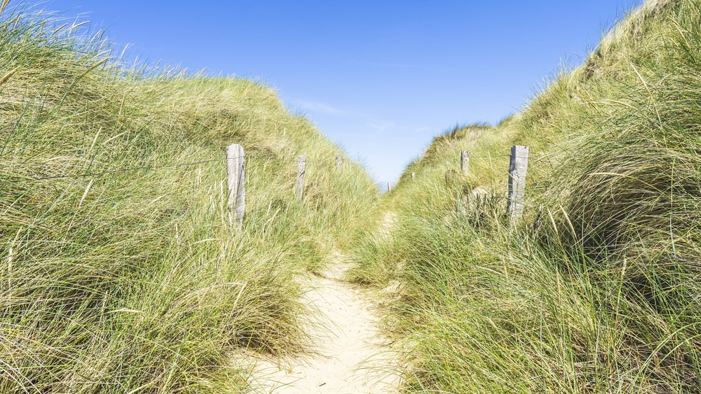 pathway surrounded with grasses