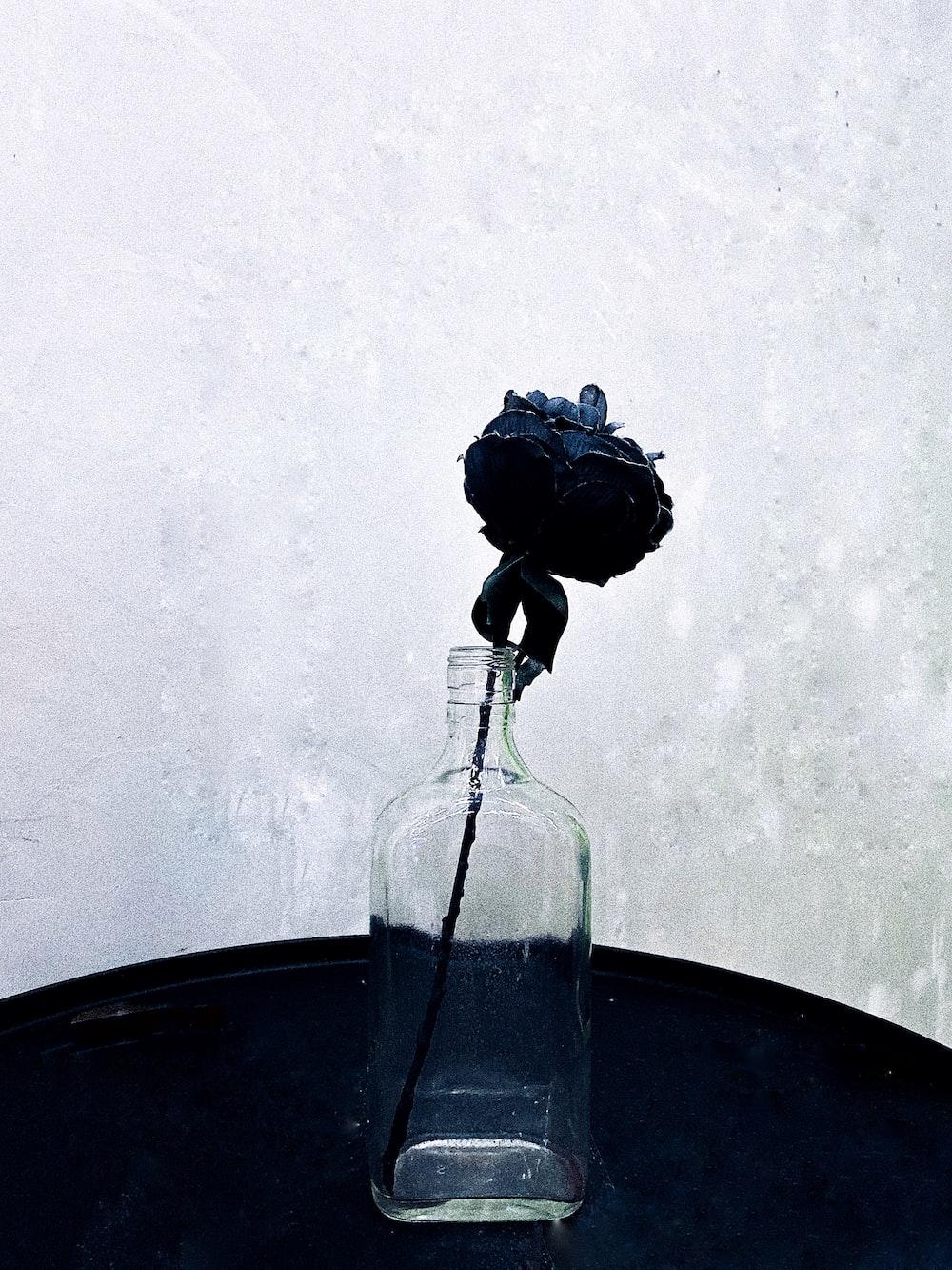 black rose in clear vase