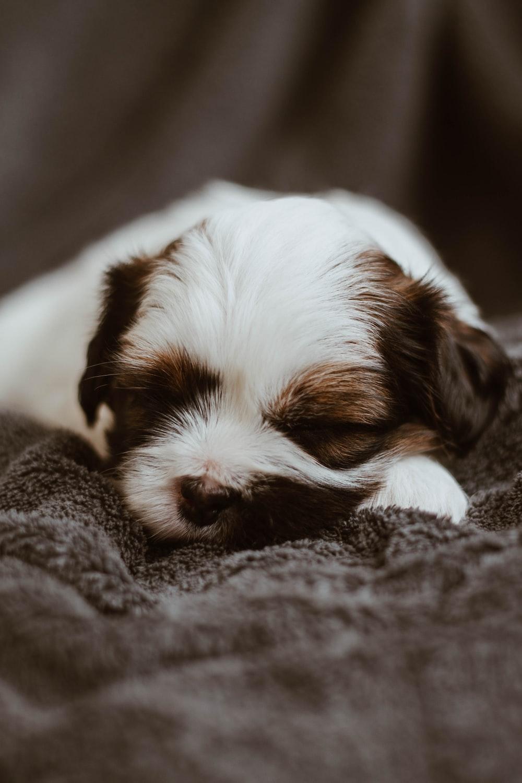 puppy sleeping on gray textile