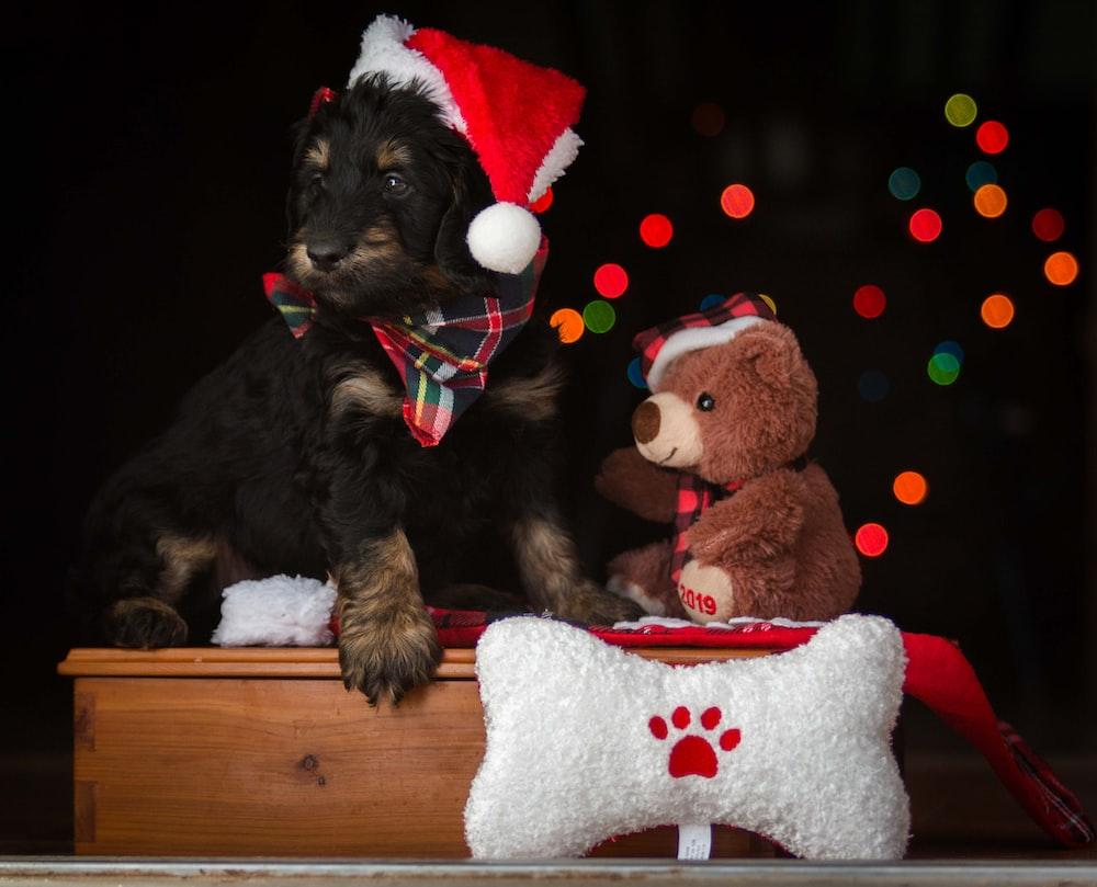 dog wearing Santa hat beside brown bear plush toy
