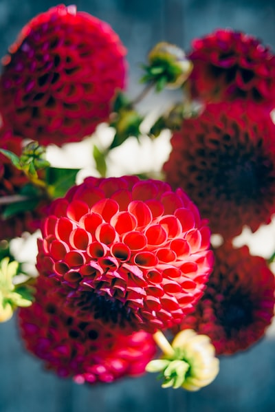 closeup photo of red cluster petaled flowers