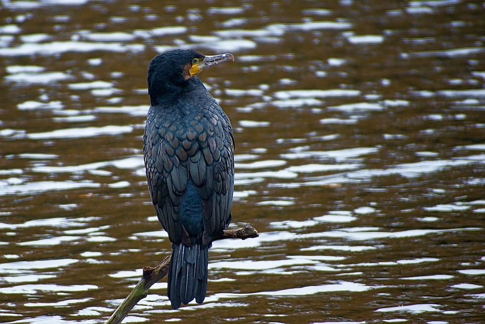 gray bird on branch near body of water