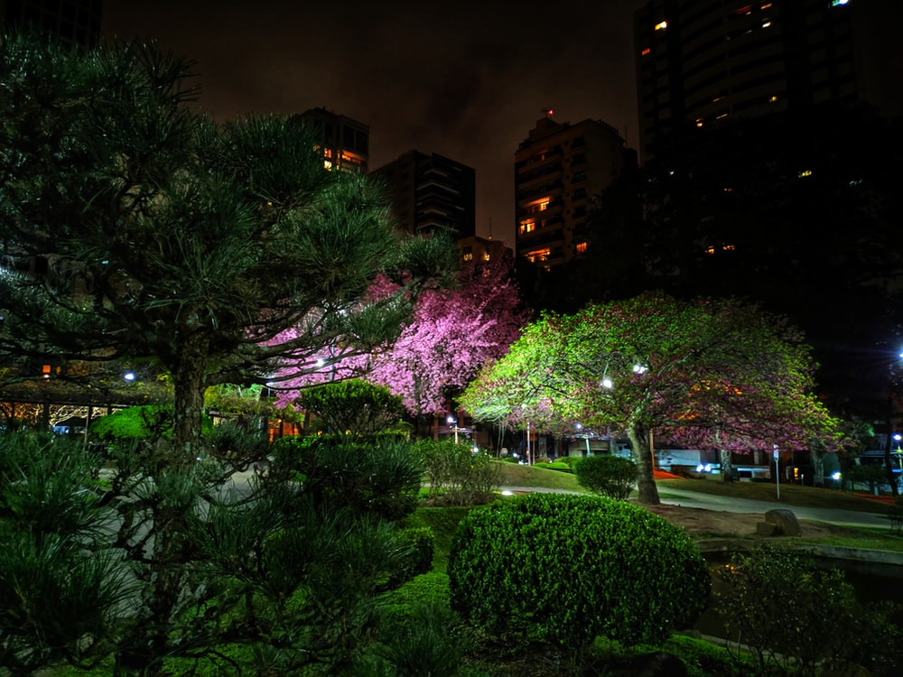 buildings surrounded with green trees during night time