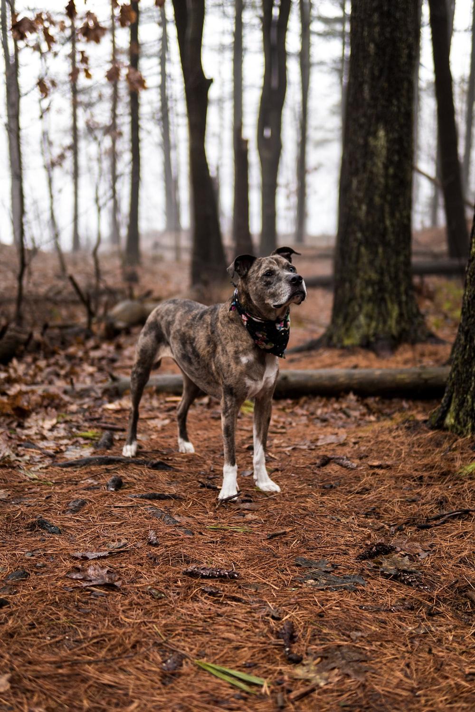short-coated gray and black dog near tree