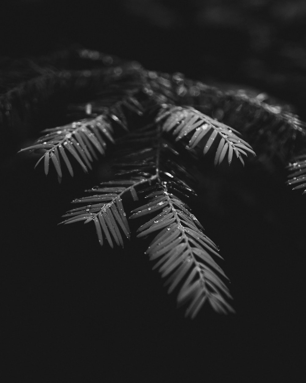 grayscale photography of water drops on plant