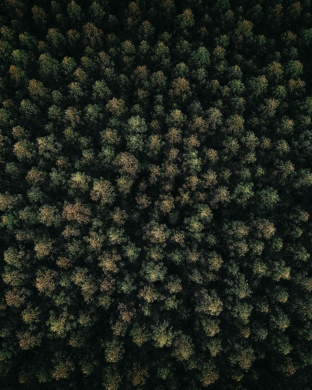 aerial photography of forest with tall trees