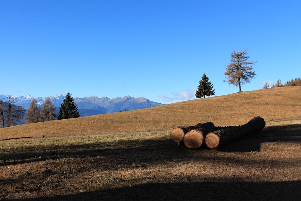 brown wood logs on field