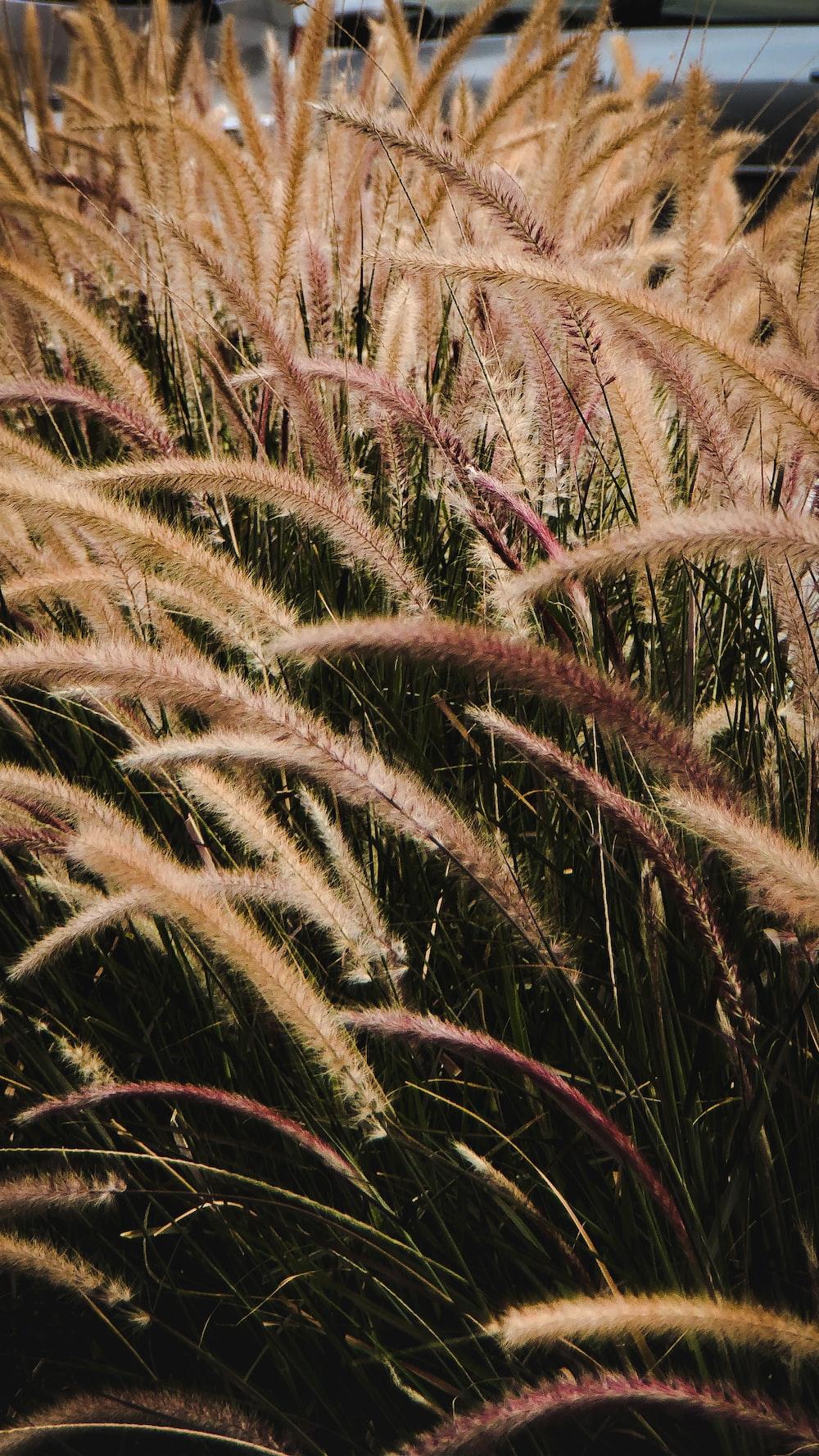 shallow focus photo of plants