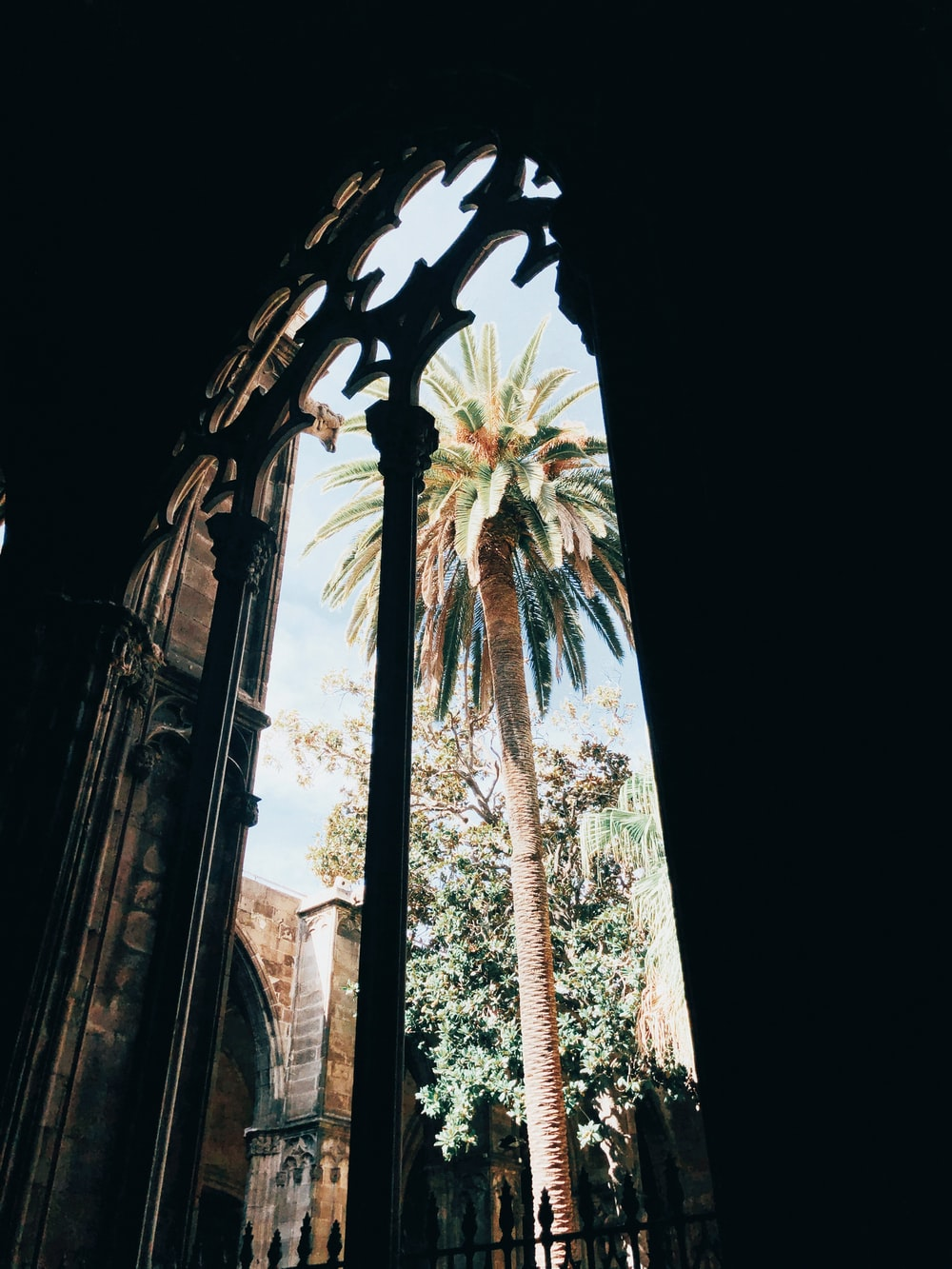 sago palm trew