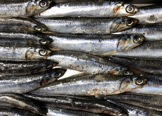 Fresh anchovies at the fish counter of a grocery store