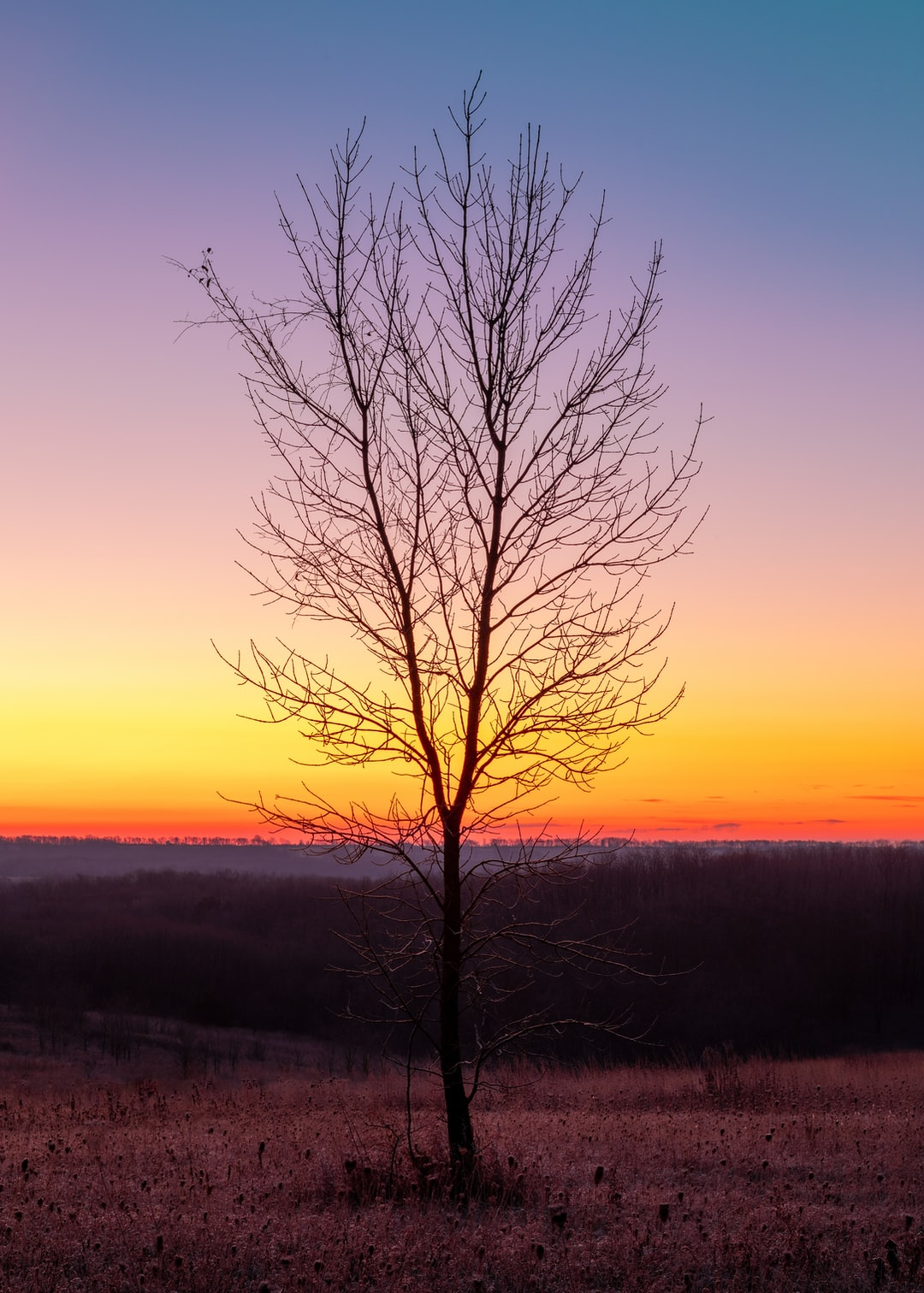 A Tree and Colors