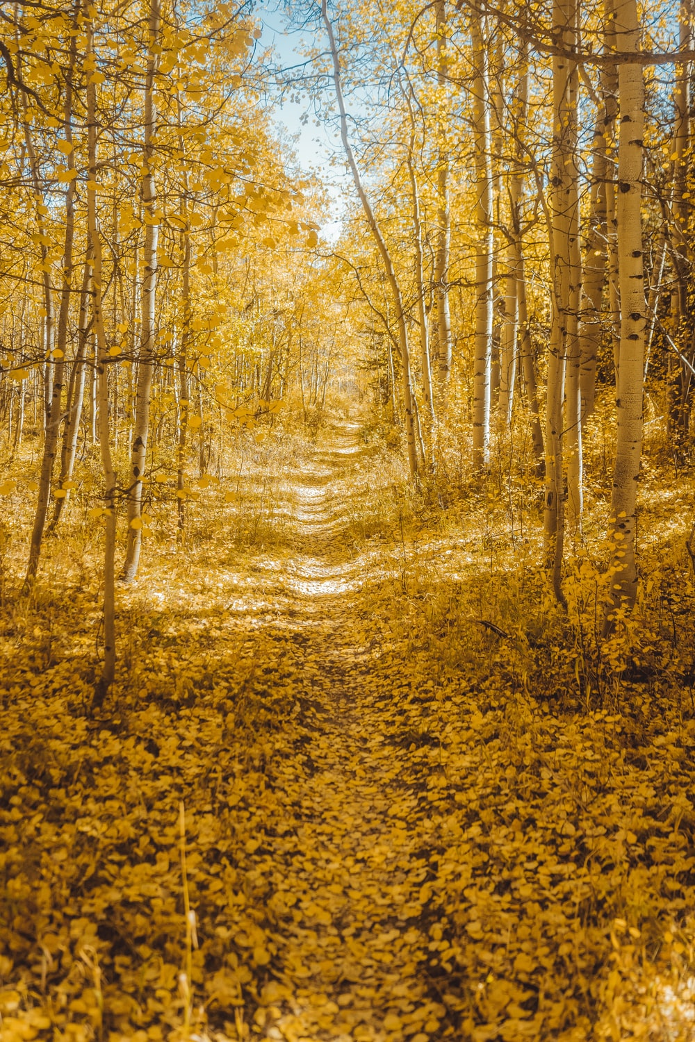 road surrounded with yellow trees under blue and white sky