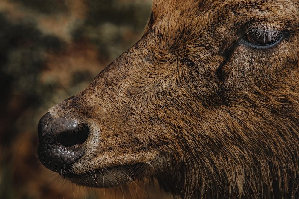 brown animal during day