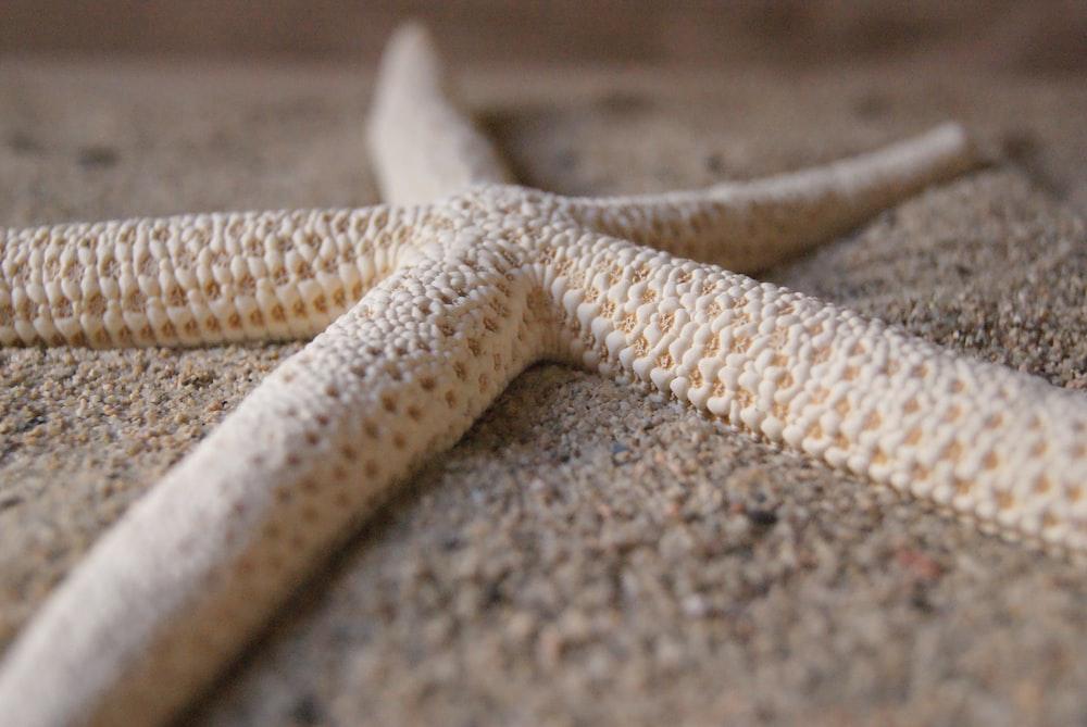 macro photography of white starfish