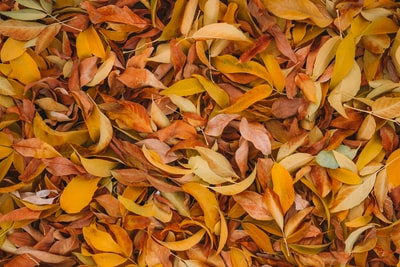 brown leaves october zoom background