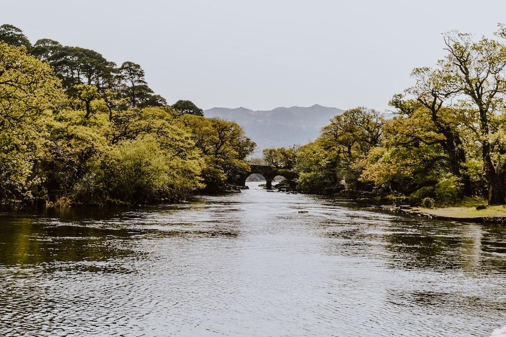 trees beside river