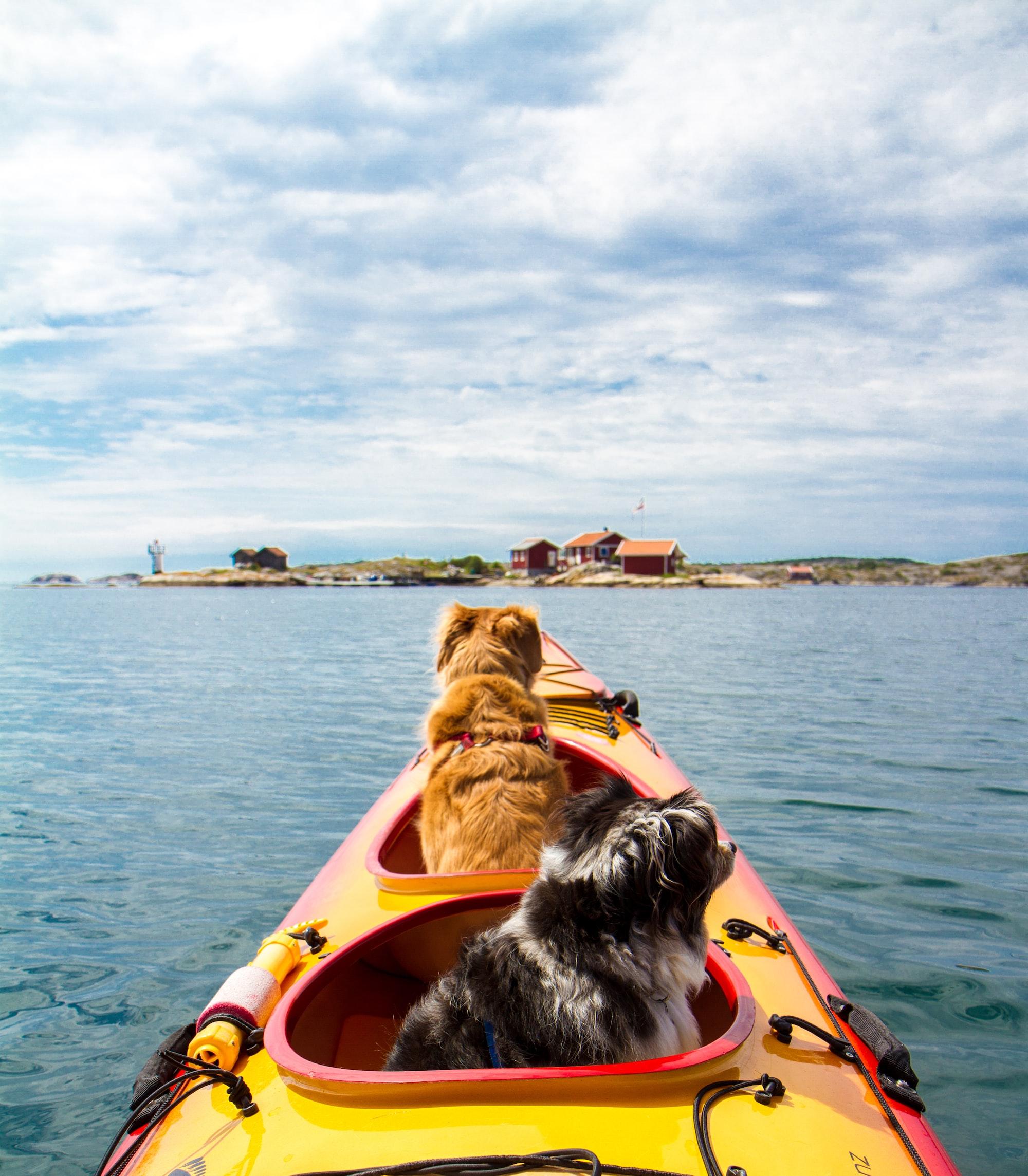 dogs on a kayak