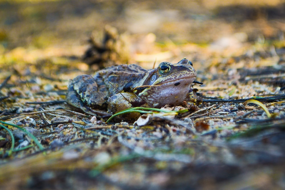 selective focus photography of a brown toad in the ground