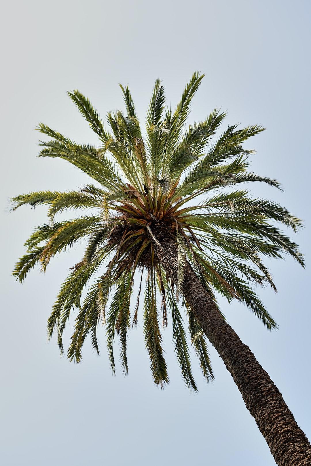Centro de Palma de Mallorca, Parque de la Catedral, verano.