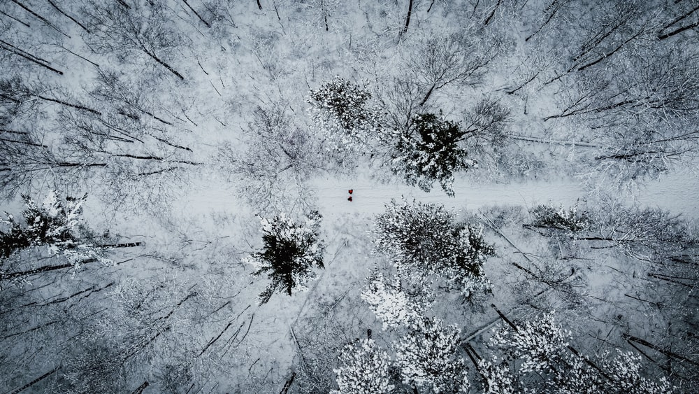 aerial photo of snow covered trees