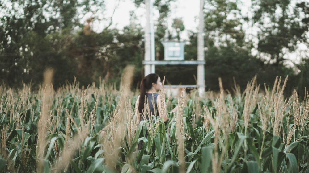 woman standing on green corn field surrounded with green trees during daytime