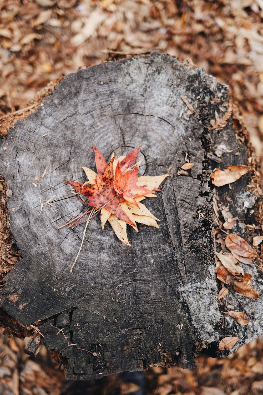 brown leaf on wooden surface