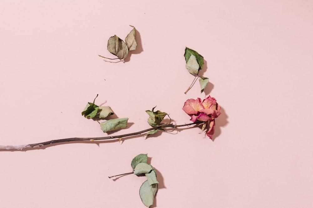 dried pink fflower