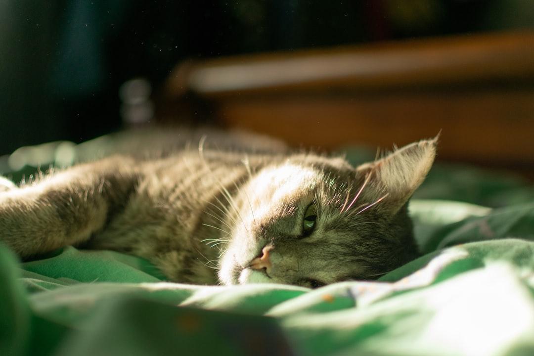 Sleepy sunbathing cat