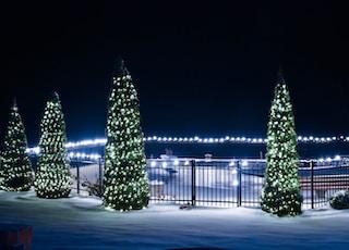 lit christmas trees