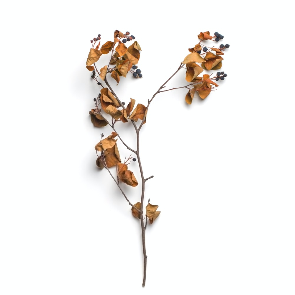 brown leaf plant branch on white surface
