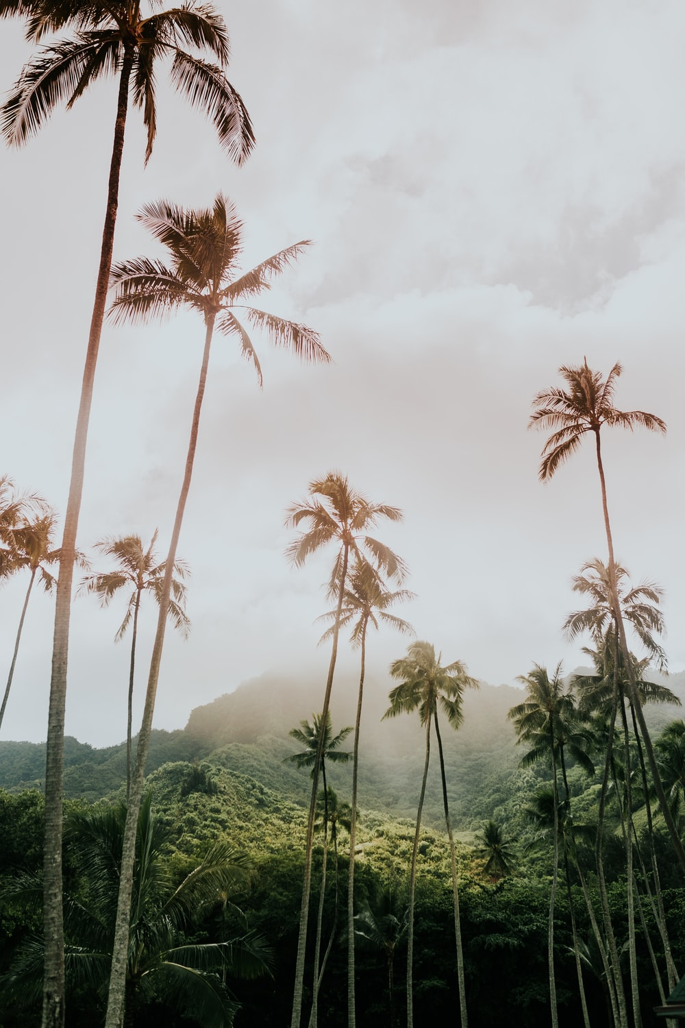 coconut trees during day