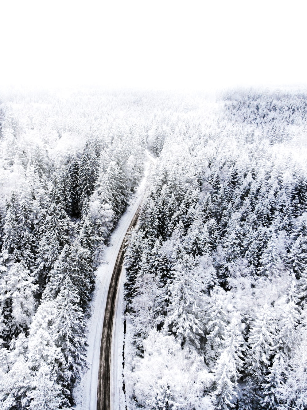 aerial photograph of road between trees during winter