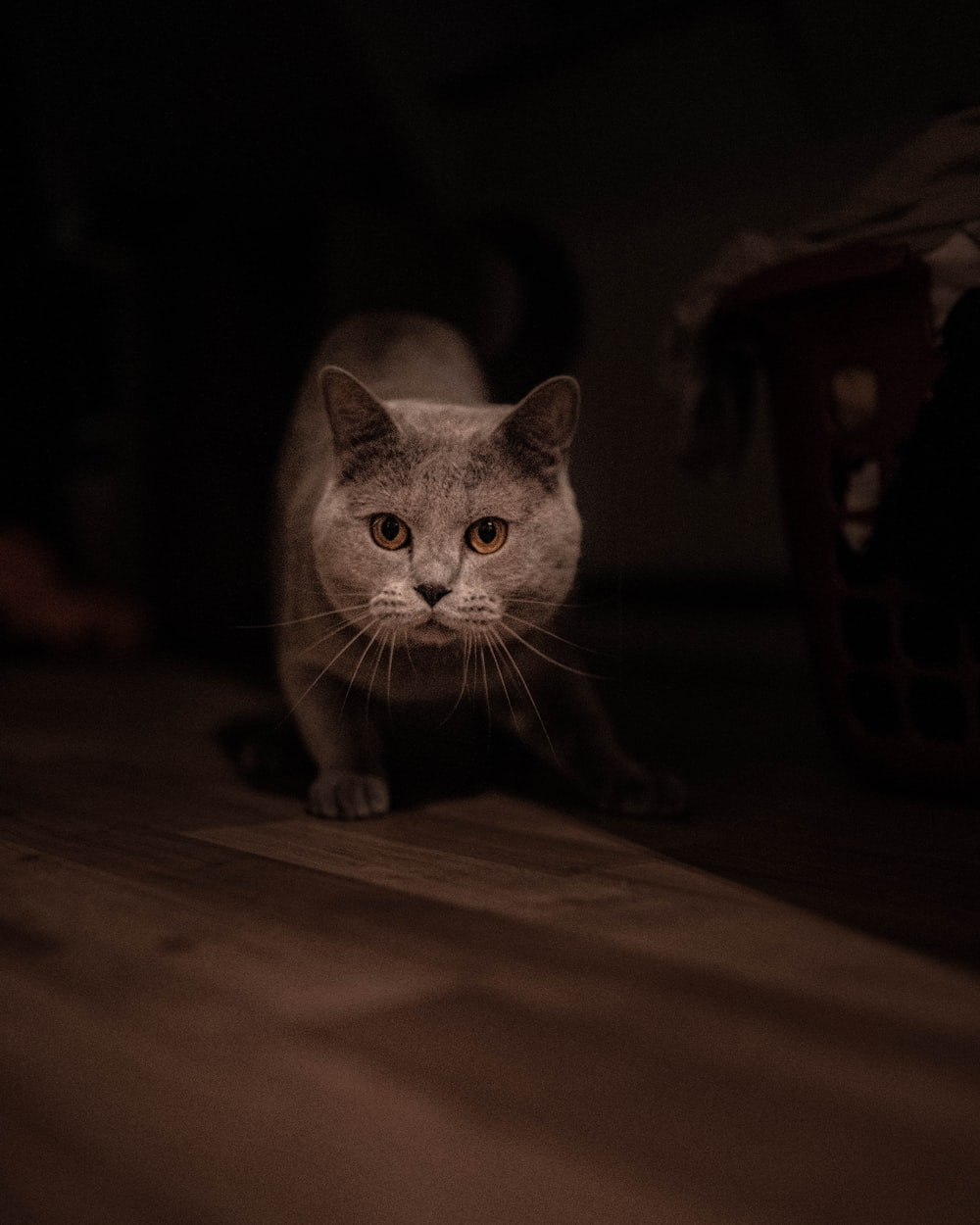 shallow focus photo of gray cat