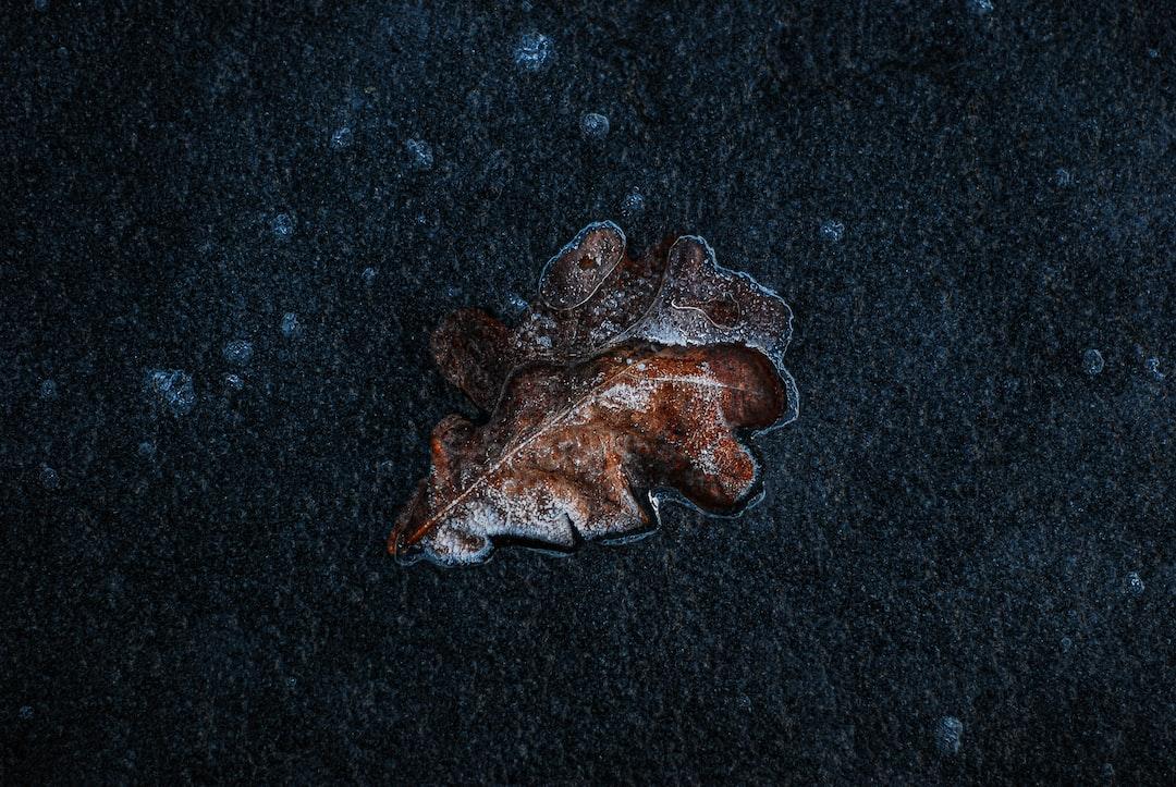 A little frozen leaf.