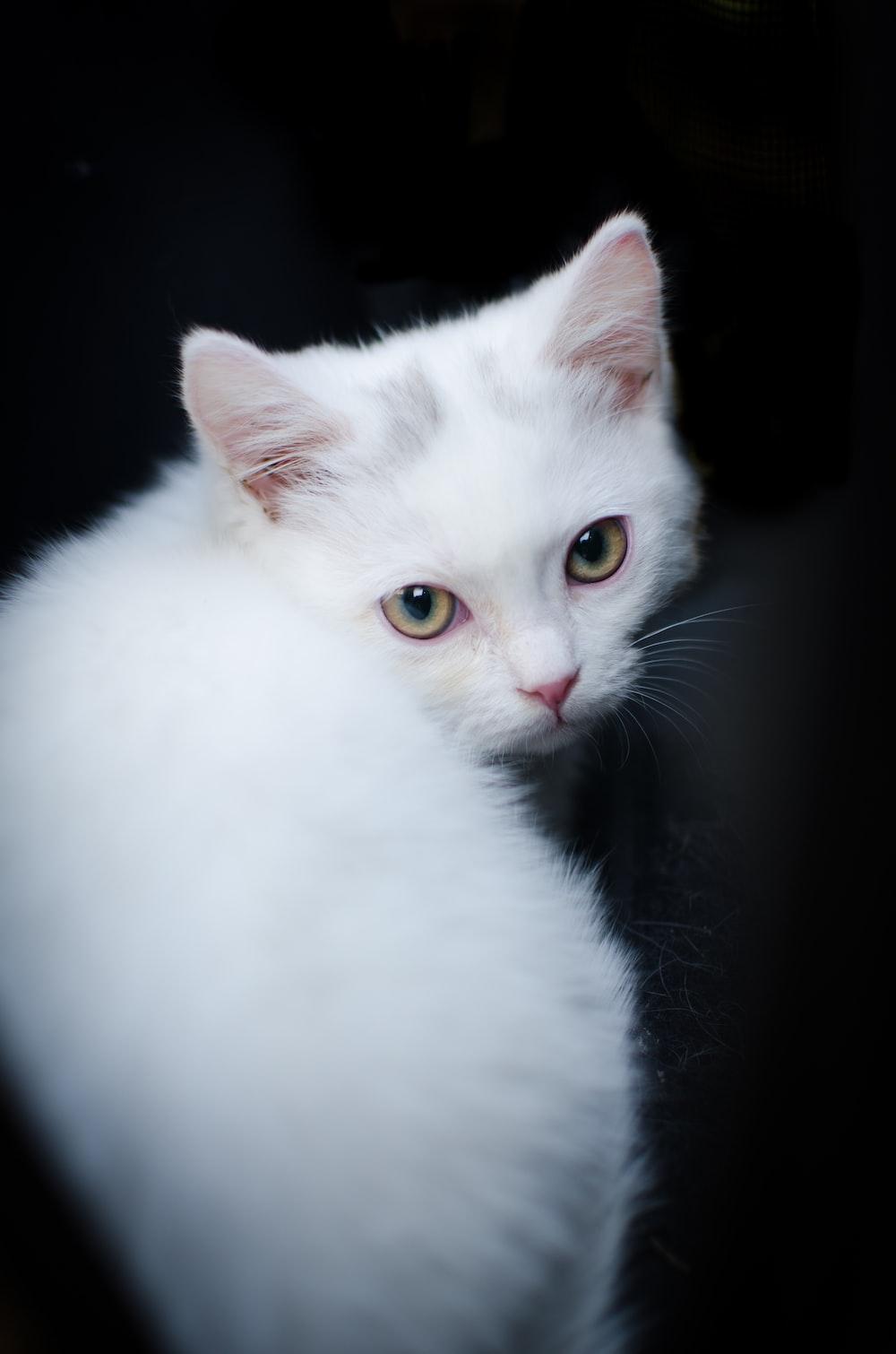 shallow focus photo of white cat
