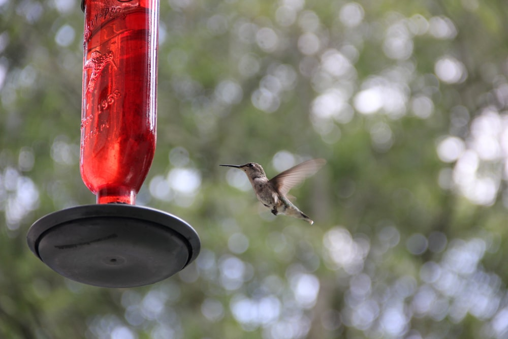 selective focus photography of bird flying near bird feeder during daytime