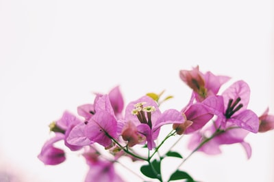 shallow focus photo of purple flowers highkey teams background