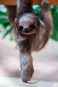 Sloths animal poem stories